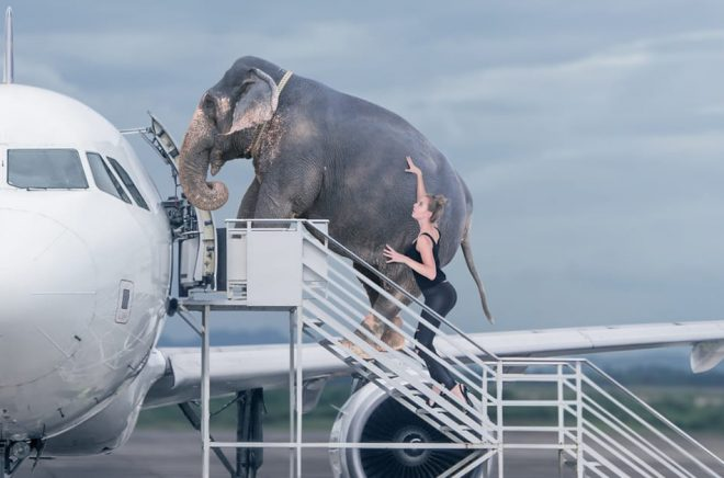 Stöddjur är ett av de nya orden på nyordslistan 2018. Elefanten är kanske inte det lämpligaste djuret för uppgiften, men mycket roligare på bild för att illustrera artikeln. Foto: iStock.