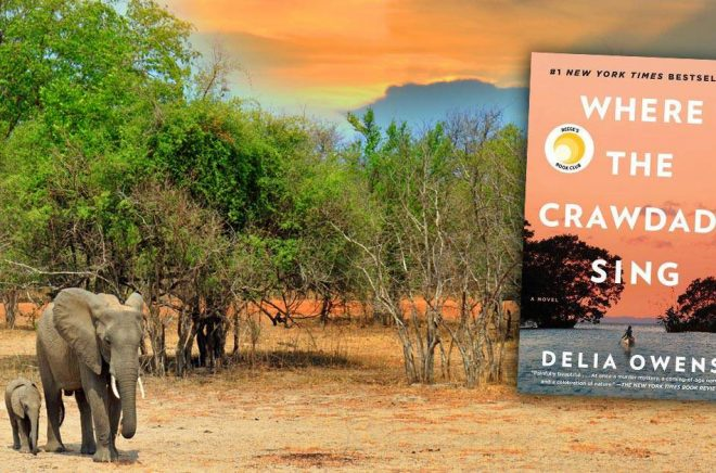 Tjuvjägare var vanliga i Zambia när Delia Owens och hennes man bodde där och jobbade med att bevara vildmarken. Ett mord på en tjuvjägare är en del av den bästsäljande romanen hon skrivit - men samtidigt har hennes man misstänkts för inblandning i ett verkligt mord, mycket likt det i boken. Bakgrundsfoto: paulafrench, iStock.